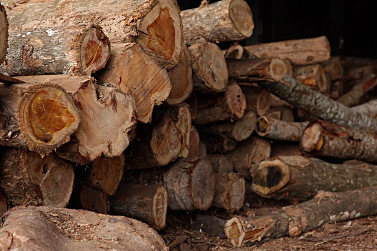 Production Wood Capacity MJM 2